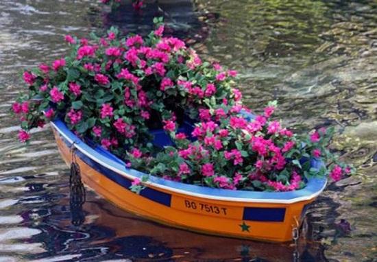 рослини для плаваючої клумби