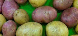 Сорти картоплі — опис, характеристики і фото