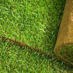 Рулонний газон: у чому його переваги