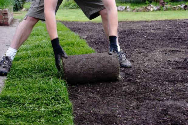 рулонний газон і технологія його укладання