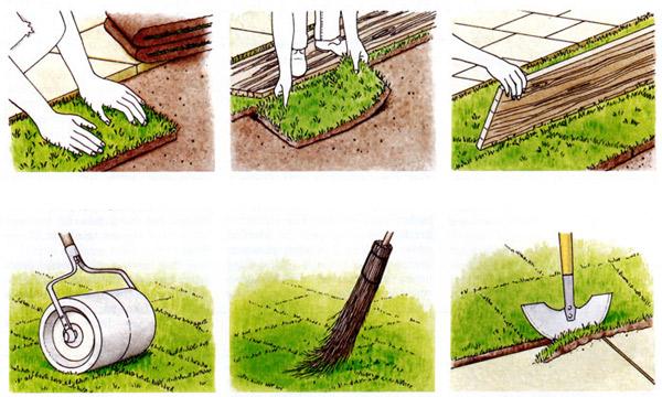 Укладання рулонного газону на фото