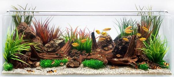 Декоративные элементы в аквариуме