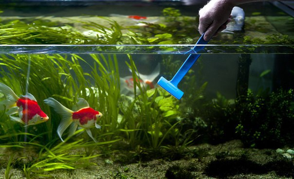 Уход за аквариумом: основные правила