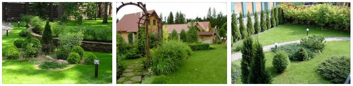 Зеленые насаждения в ландшафтном дизайне участка