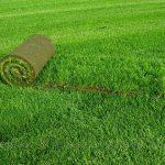 рулонний газон для дачі