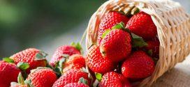 Як отримати хороший урожай полуниці. П'ять порад