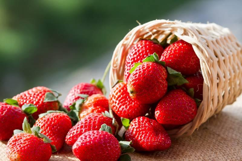 Як отримати хороший урожай полуниці