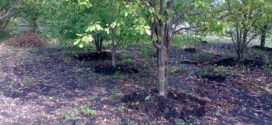 Які добрива вносити восени під плодові дерева і чагарники