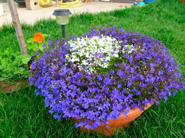 квіти для клумби назва фото