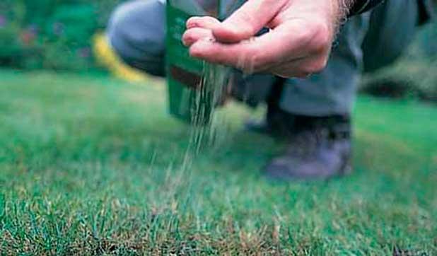 Коли краще садити газонну траву