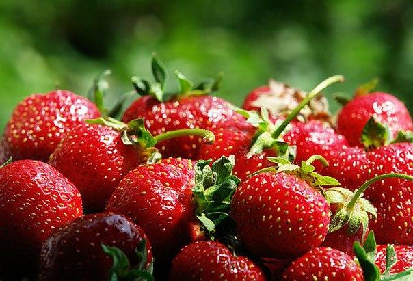Весняна підгодівля полуниці
