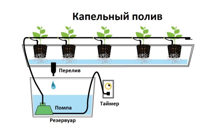 Разновидности систем гидропоники
