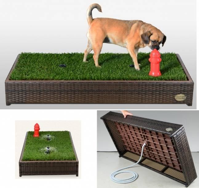 туалет для собаки во дворе