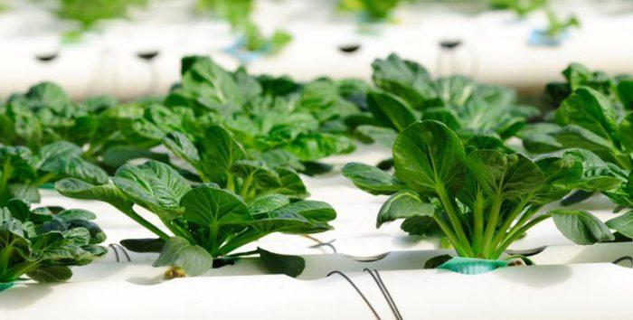 Прогрессивные методы выращивания растений: гидропонные установки