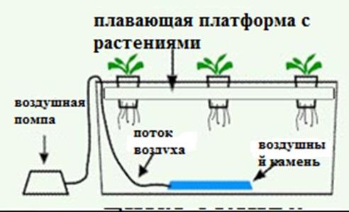 Выращивание без почвы 71