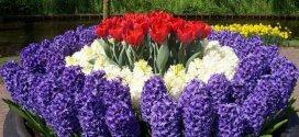 Багаторічні садові квіти