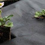 Преимущества использования агроволокна
