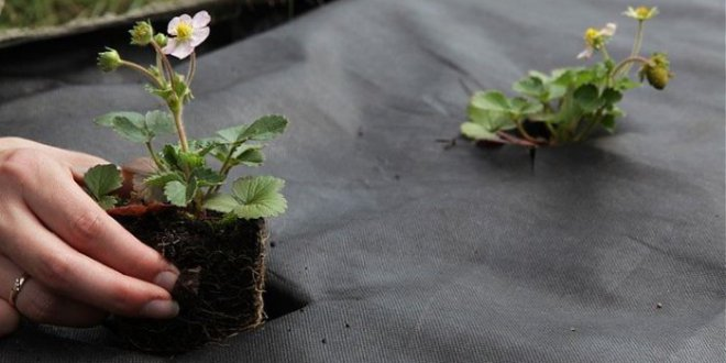 Агроволокно: какими преимуществами оно обладает?