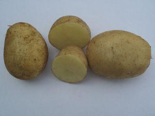 Картопля сорту Арізона