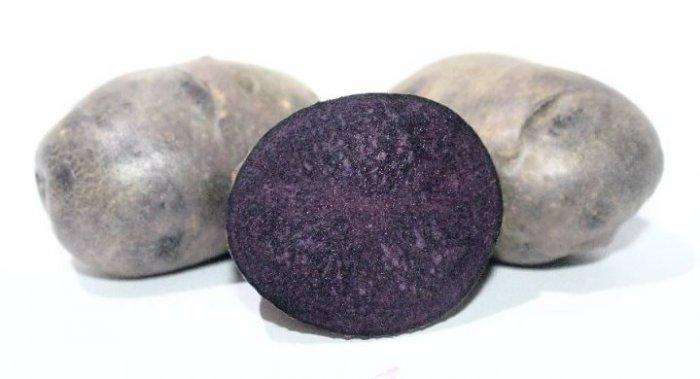 сорт картоплі Солоха