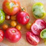 урожайні сорти томатів