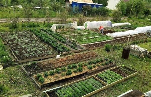 Коли висаджувати помідори, огірки та перець у відкритий грунт