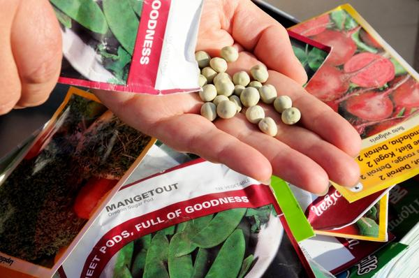 Як вибрати насіння хорошої якості
