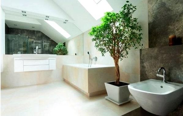 Поради по розташуванню кімнатних рослин в інтер'єрі квартири