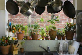 Кімнатні рослини в інтер'єрі квартири – рекомендації професіоналів