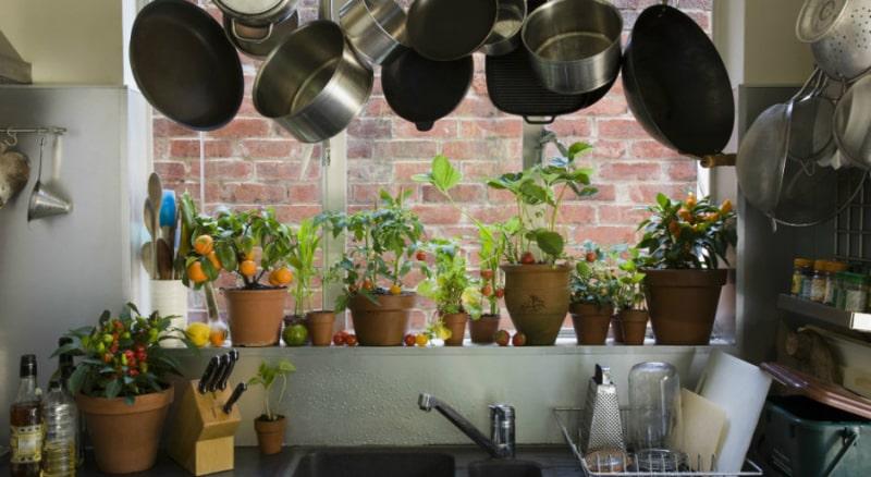 Рослини для харчоблоку