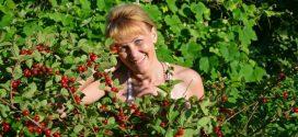 Повстяна вишня: вирощування, посадка і догляд
