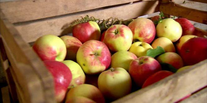 Как хранить яблоки: полезные советы